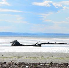#grado #pineta #sea #italy Seaside, Outdoor Decor, Summer, House, Summer Time, Home, Beach, Homes, Coast