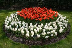 33 Beautiful Flower Beds Adding Bright Centerpieces to Yard Landscaping and Garden Design – Lushome Flower Garden Design, Modern Garden Design, Backyard Garden Design, Backyard Designs, Garden Bed, Modern Design, Tulips Garden, Garden Bulbs, Amazing Gardens