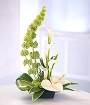 A modern tall arrangement featuring white Calla Lilies, white Anthurium, bells of Ireland and Chrysanthemums