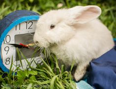 Foto 237 de 365 ¿Que hora es McTwisp?