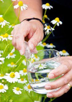 How To Make a Flower Essence - Flower Spirit
