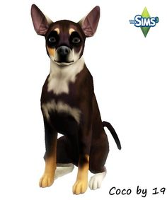 Hündin Coco by Michaela P. - Sims 3 Downloads CC Caboodle Sims Pets, Download Cc, Free Sims, Sims 4 Mm Cc, Fun Games, Chihuahua, Boston Terrier, Dogs And Puppies, French Bulldog