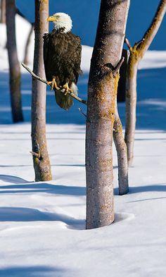 Eagle, in Anchorage, Alaska