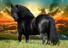 EXCESIVO caballo negro pura raza española en venta
