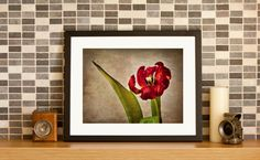 Romantic and red, this tulip has textures of silk and an exquisite delicacy. You can see more at http://tuomuro.com/products/petlp106