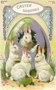 Easter (white) rabbits, to celebrate the Roman Catholic pagan holy-day of Ishtar.