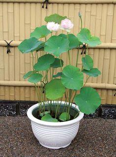 Purposeful Biorb Easy Plant Winter Flowers Medium Fish & Aquariums