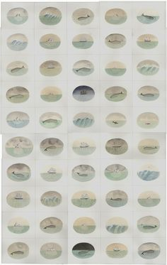hicockalorum:  Sophie Blackall: Whales and Ships and Icebergs