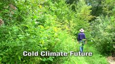 Cold Climate Future.mp4. Geoff visits a 40 Year old Food Forest system in Massachusetts, USA. He also looks at wood heating, Maple syrup and...