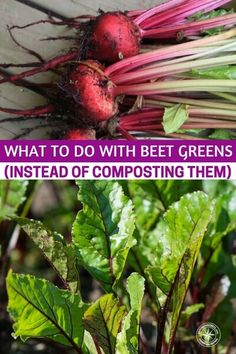 What to do With Beet Greens (Instead of Composting Them) - What do you do with those beet tops Beet Jelly Recipe, Jelly Recipes, Top Recipes, Whole Food Recipes, Paleo Recipes, Beet Leaf Recipes, Beet Green Recipes, Cooking Beets, Healthy Cooking