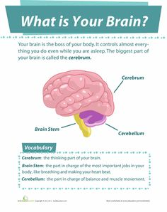 What is your brain? There are some parts of our brains that are still too complicated for scientists to understand! Find out the basics of the brain's functions with this fun page. Shapes Worksheet Kindergarten, 2nd Grade Worksheets, Science Worksheets, Brain Activities, Grammar Worksheets, Biology Lessons, Science Lessons, Study Biology, Science Notes