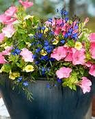 Proven Winners Container Gardens - Bing Images
