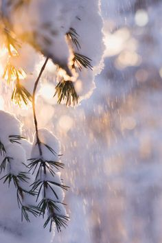 Retreat from Stress | Surround yourself with the sights, sounds, smells, tastes, and feelings that melt away stress, bring you joy, and put a smile on your face! Winter Day, Winter Season, Snowy Day, Winter Magic, I Love Winter, Winter Christmas, Winter Snow, Winter Light, Winter White