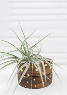 Outstanding 50 Air Plant for Your Kids Room Ideas https://mybabydoo.com/2017/04/07/50-air-plant-kids-room-ideas/ -In this Article You will find many Air Plant for Your Kids Room Inspiration and Ideas. Hopefully these will give you some good ideas also.