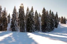 Winter in Apuseni Mountains, Romania - Photography by Vasile Valcan Follow Me On Instagram, Romania, Mountains, Winter, Places, Pictures, Photography, Travel, Beautiful