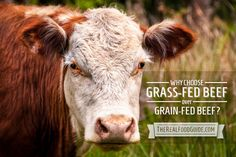 Why Choose Grass-Fed Beef Over Grain-Fed Beef? - The Real Food Guide