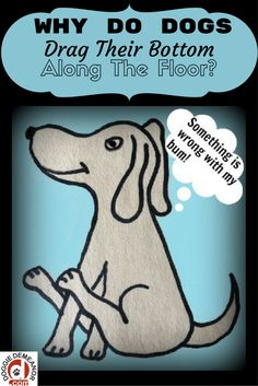Ever wonder why your dog does that funny butt scootch thing? Why do dogs drag their bottom along the floor?