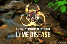 Natural Strategies to Overcome Lyme Disease