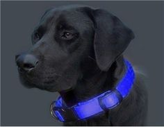 Glowing pet collar... this would help me find Fiki at night.