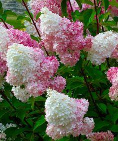 Flowers, Garden Ideas, Plants, Gardening, Lawn And Garden, Landscaping Ideas, Plant, Backyard Ideas, Royal Icing Flowers