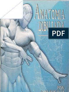 Anatomy Sketches, Anatomy Drawing, Anatomy Art, Human Anatomy, Body Drawing, Figure Drawing, Drawing Lessons, Drawing Tips, Zbrush