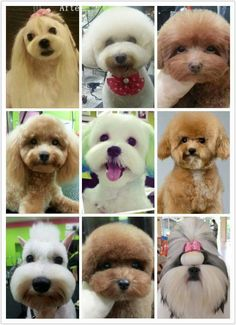 Hair dye at happy dog cafe boutique amp spa inc dog grooming
