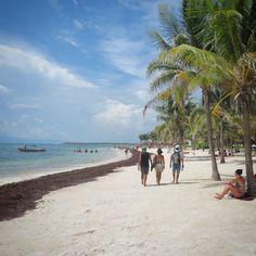 Hoje foi o dia de conhecermos a praia de Akumal entre Playa del Carmen e Tulum na qual nadamos com várias tartarugas!  #Mexico #RivieraMaya by just.journeys