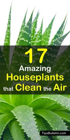 The best house plants that actually purify the air and are very low maintenance. Ranging from peace lily, bamboo palm to aloe vera plants, most of these are low light easy-to-care-for houseplants. They help to clean indoor air and filter harmful toxins. Indoor Plants Clean Air, Best Indoor Plants, Cool Plants, Outdoor Plants, Aloe Vera Plant Indoor, Plants That Clean Air, Aloe Plant Care, Outdoor Gardens, Inside Plants