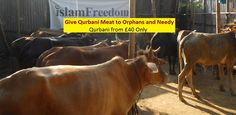 Qurbani Appeal 2016 from £40 and Payments http://p0.vresp.com/MnHKe0