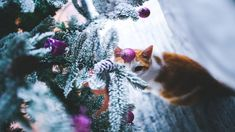 Christmas Tree Images Pictures Photos Collection 2019 - Talk In Now Christmas Tree Pictures, Cool Christmas Trees, Christmas Cats, Christmas Home, Merry Christmas Wallpaper, Merry Christmas Quotes, Home Improvement Show, Home Improvement Projects, Nightmare Before Christmas