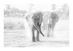 BW images of elephants in dust African Animals, African Elephant, Elephant Images, The Great Migration, Charcoal Art, Wildlife Art, Wildlife Photography, Elephants, Art Images