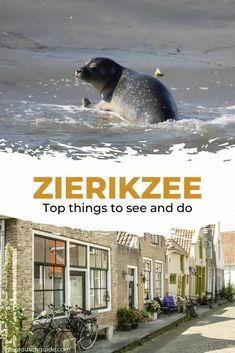 Zierikzee, The Netherlands. Check out all the top things to do and see in Zierikzee, The Netherlands. Stuff To Do, Things To Do, Historical Monuments, Netherlands, Travel Inspiration, Safari, Explore, Check, Dutch