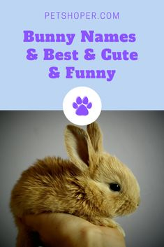 Bunny Names Best List + 150 Cute & Funny Names Cute Animal Names, Cute Pet Names, Cute Little Animals, Boy Rabbit Names, Bunny Names, Funny Rabbit, Funny Bunnies, Cute Bunny, Baby Bear Cub