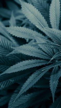 Weed Wallpaper, Hippie Wallpaper, Skull Wallpaper, Dark Wallpaper, Nature Wallpaper, Marijuana Plants, Weed Backgrounds, Brand Design