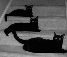 Black Cats~ For Kitt, we love and miss you so much......................
