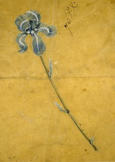 Sketch for the 'Tiffany Iris Corsage Ornament' (circa by George Paulding Farnham Watercolour on tracing paper. Tiffany & Co. Walters Art Museum via Wikimedia High Jewelry, Jewelry Art, Vintage Jewelry, Jewelry Design, Antique Jewelry, Jewellery Sketches, Jewelry Drawing, Jewelry Sketch, Jugendstil Design