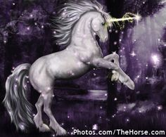 Unicorn   ... the lookout in boston for alice here s what the typical unicorn looks