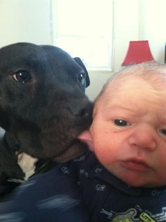 This is Cherry, one of the Michael Vick fighting dogs with his new little brother Novi! Who says you can't rehab fighting pitbulls??!!