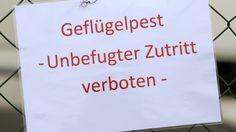 #Neukloster: Geflügelpest in Nutztierhaltung - NDR.de: NDR.de Neukloster: Geflügelpest in Nutztierhaltung NDR.de In Neukloster (Landkreis…