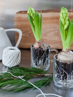 DIY Houseplants - so many plants. I feel like having plants in your home has taken a real up and up in the interior design world Growing Gardens, Growing Plants, Indoor Garden, Indoor Plants, Plant In Glass, Bulbs And Seeds, Ikea Christmas, Red And White Weddings, Spring Bulbs