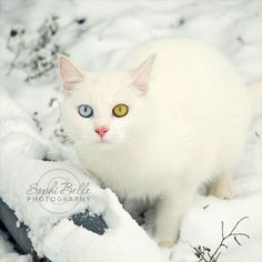 Oh my gosh, I love this Kittys cats eyes !!