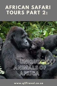 Where can you find the unique animals of Africa Gorilla Trekking, Unique Animals, Lemur, African Safari, Uganda, Elephant, Tours, Blog, Travel