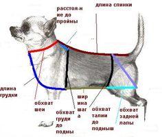 Построение выкройки для собак.. Обсуждение на LiveInternet - Российский Сервис Онлайн-Дневников