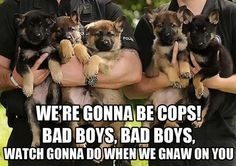 We are gonna be cops. Funny image of baby police dogs getting ready for their first day of training. See more funny police pictures at Law Enforcement Affairs. Love My Dog, Cop Dog, Police Dogs, Funny Police, Police Humor, Baby Animals, Funny Animals, Cute Animals, Cute Puppies