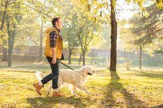 Educare il cane: 7 strategie e tecniche essenziali per l'addestramento dei nostri amici a 4 zampe. I consigli degli educatori cinofili per un cane educato