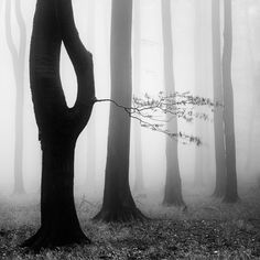 Forest by Martin Rak on 500px