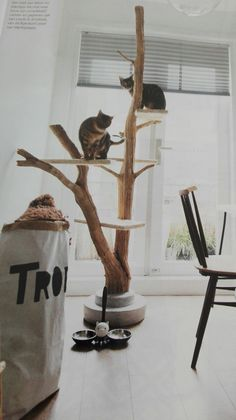 #Krabpaal Design http://www.perfectchange-ragdoll.nl/winkel/ Krabpaal Sisal, Krabpaal Hangmat