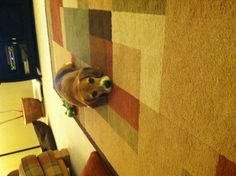 My puppy!! <3