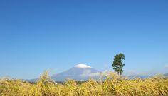 秋色の御殿場富士山