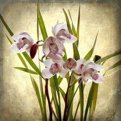Orquideas by gilxxl, via Flickr